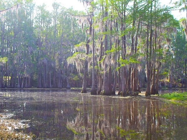 The beauty of Bayou DeSiard surrounds the exclusive Frenchman's Bend subdivision