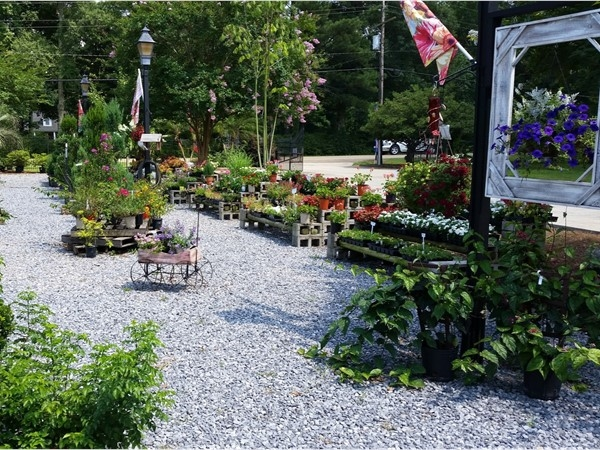 Don't miss D's Garden Center if you live in the Highland Road area