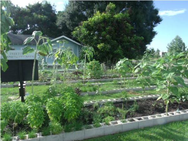 Freetown Community Garden: Beautiful greenery in the City of Lafayette