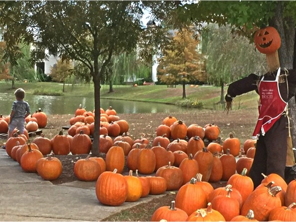 The pumpkin patch at Provenance is a fall favorite!