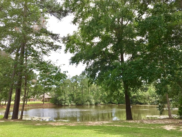 Ponds surrounded by mature trees and green grass create a beautiful environment