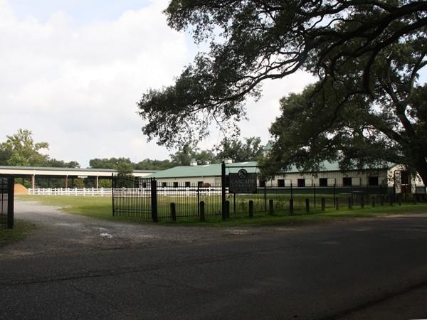 Horse stables in Audubon Park