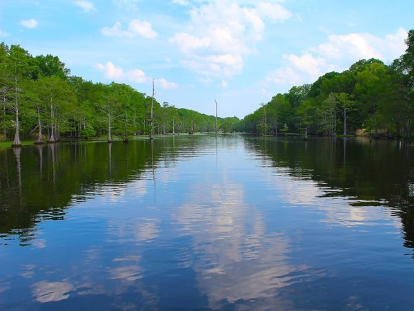 The gorgeous views of Bayou DeSiard from Egret Landing are amazing