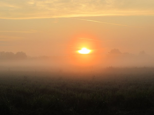 Sunrise over the cane fields