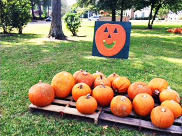 Create new fall memories. Visit the Great Pumpkin Patch in Alexandria Garden District