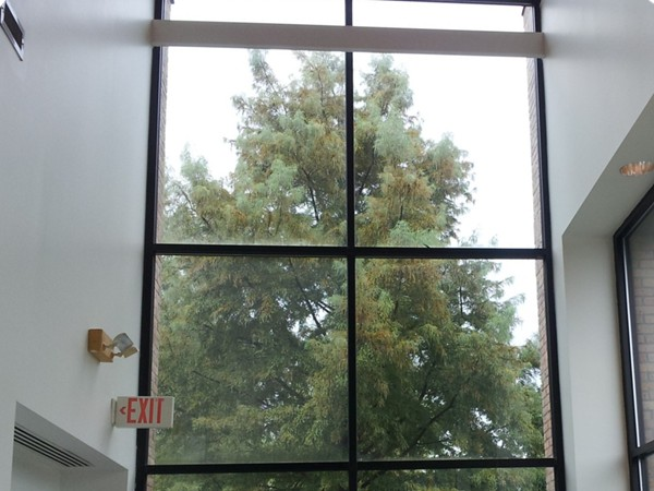 View from inside the Mandeville Post Office