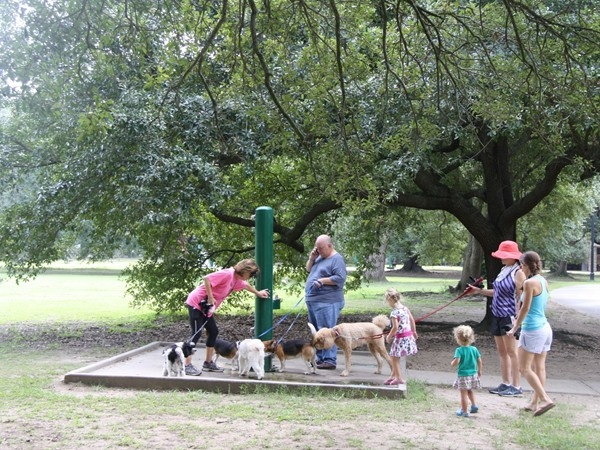 Puppy watering hole at Audubon Park