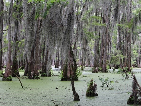 Frenchman's Bend is surrounded by Bayou DeSiard and all the charms and nature that it brings