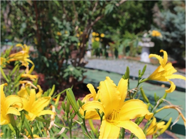 Beautiful blossoms and hidden gems can be found at Thomas Nursery & Feed's Pavilion