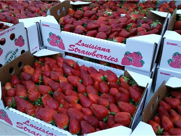 Red Stick Farmer's Market in downtown Baton Rouge welcomes spring and strawberry season