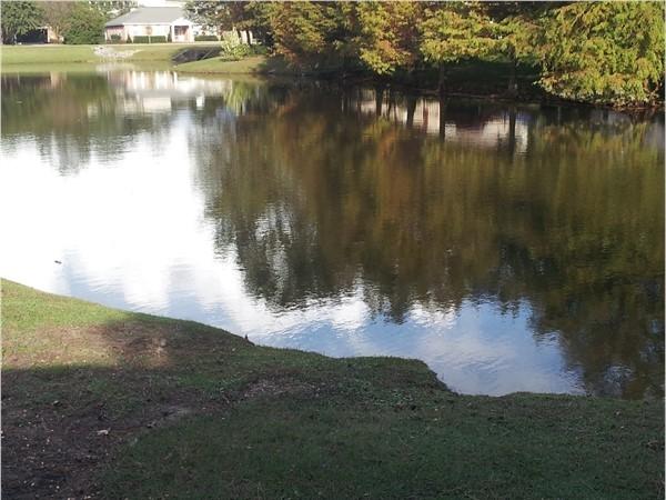 Brink-of-autumn pond view in Estates of Northpark