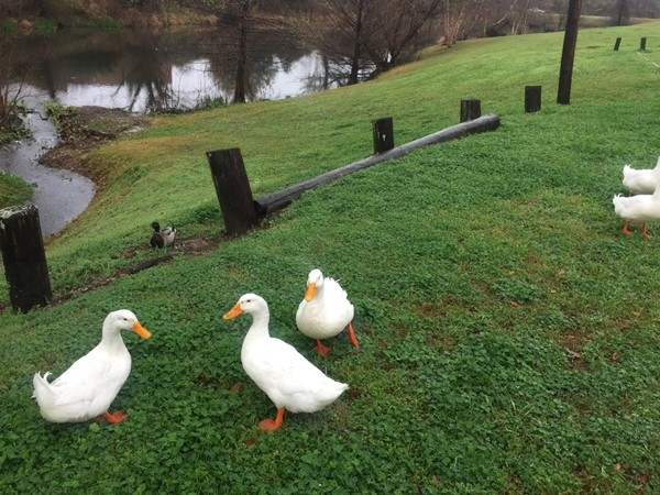 Close to the Shreve Island neighborhood, the Duck Park is a great place for your family to play