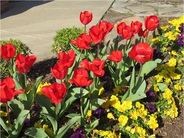 Love, love, love spring blooms