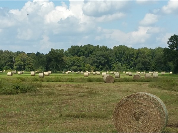 You know it's fall when the hay bales start appearing