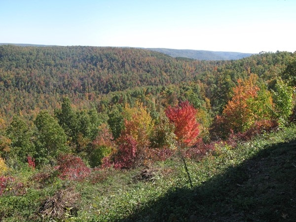 Fall colors bless this part of Hwy 7 South for as far as the eye can see