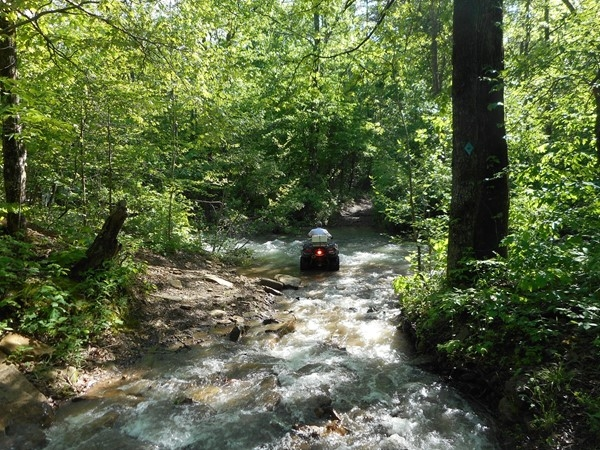 Great day outdoors in the Arkansas wilderness