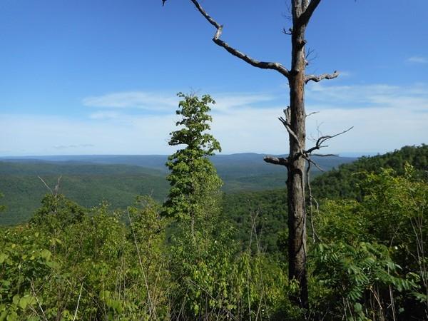More Arkansas beauty