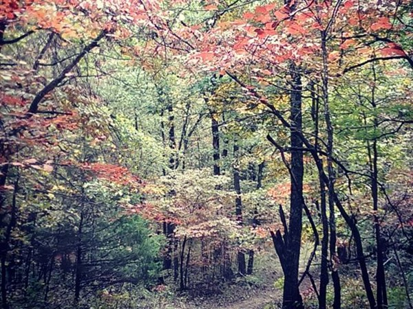 Discover the beauty of fall on any of the trails that surround Boone and Newton Counties