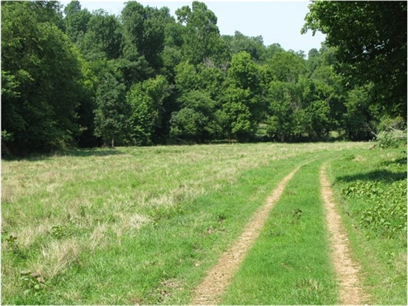 Country view in Rogers! Lots of land for sale in the region