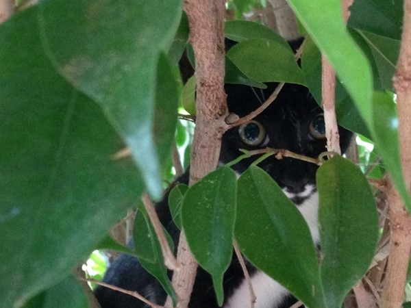 Found a kitty in a tree