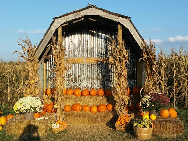 Fall fun in Springdale at Ozark Corn Maze