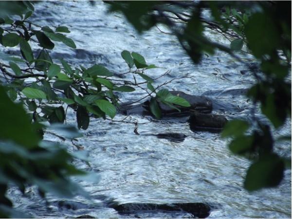 Babbling brook in Clarksville