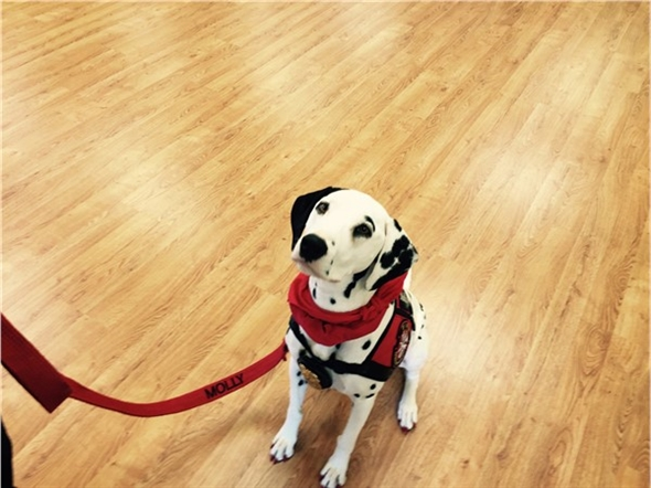 Molly, the famous Fire Safety Dog for Clarksville RFD