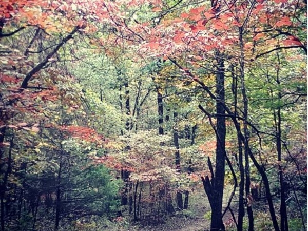 Fall colors of the Ozarks