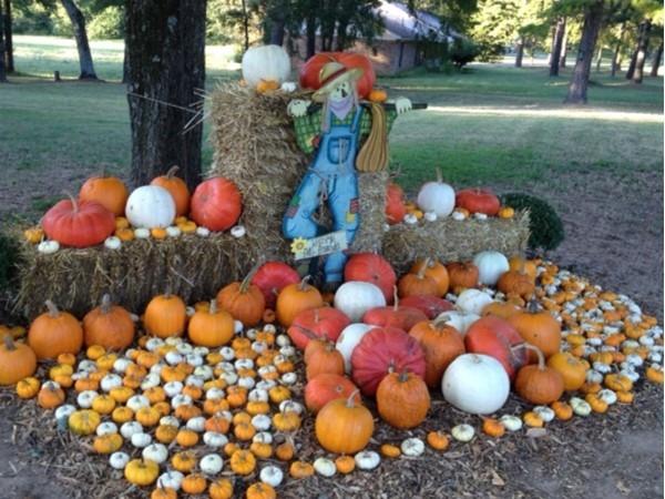 Pumpkin patch found in the Golden Pond area