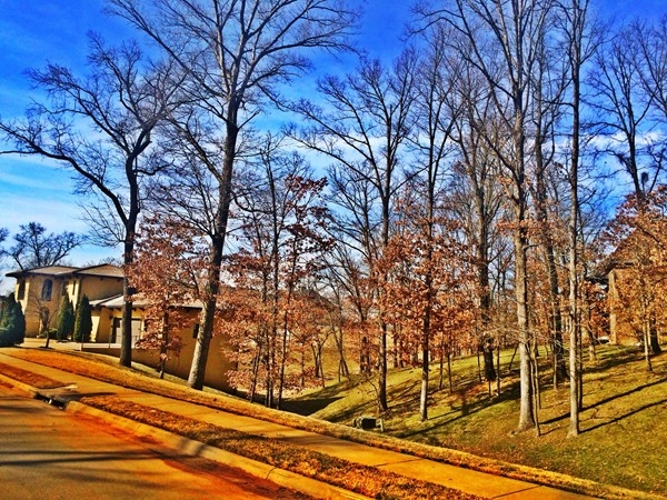 Wooded common area in Shadow Valley Subdivision