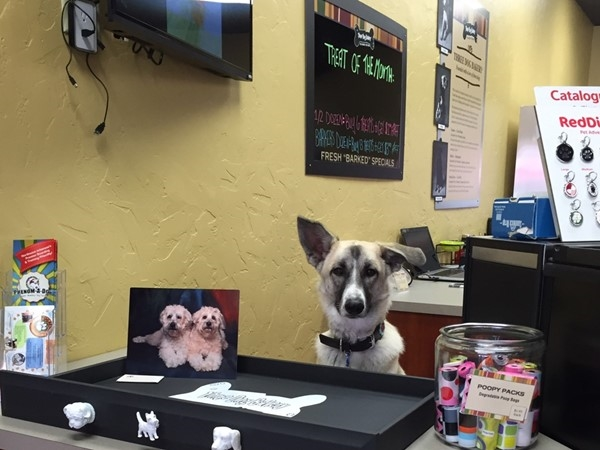 Can I help you?  Doggie treats for all!  Three Dog Bakery on the popular Bentonville Square