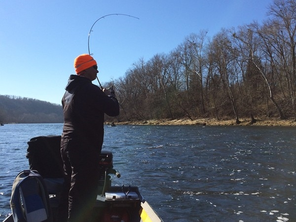 Fish on! Trout fishing on the White River at White Hole access.   Short drive from Harrison