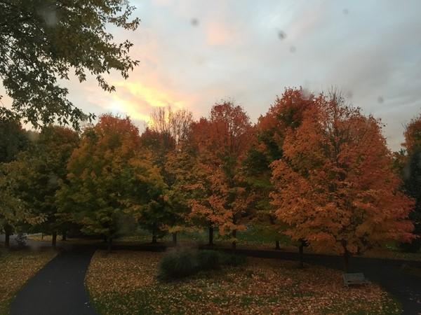 Fall foilage at sunrise in late October in Grahm Creek Heights