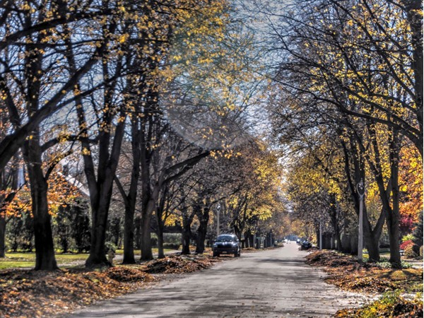 Pelham Road in Brighton is just another beautiful tree lined street in Rochester