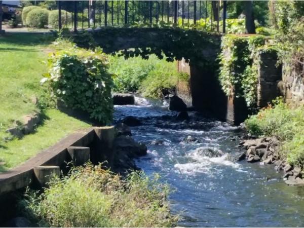 A pretty stream at the park