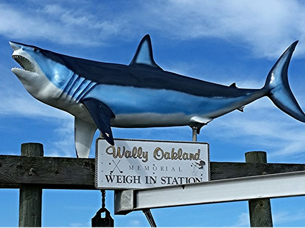 Weigh in station. Shinnecock Inlet