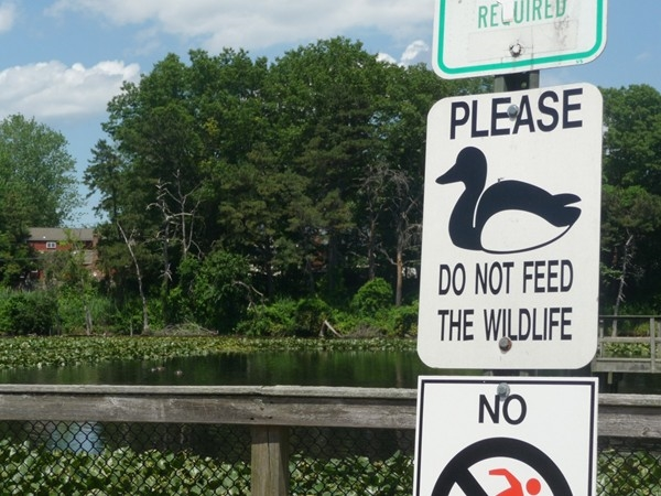Don't feed the ducks at Gibbs Pond
