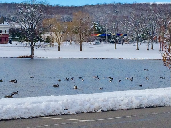 These geese don't realize that it's winter