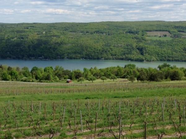 Keuka Lake and Bully Hill Vineyard