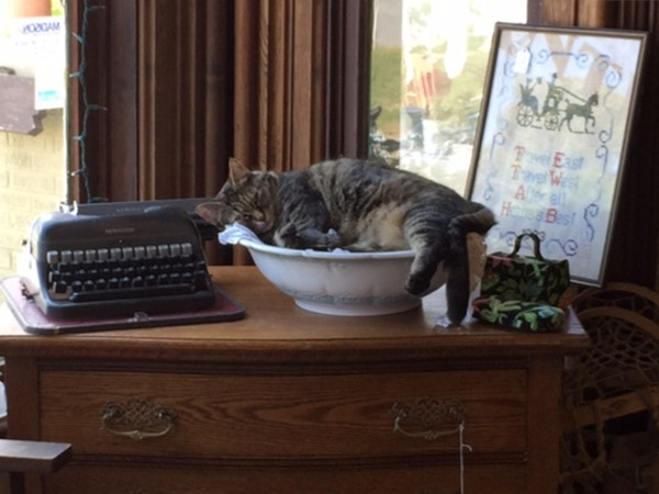 Cottage Rose Antiques - Kitty Rose finds an unusual place to nap