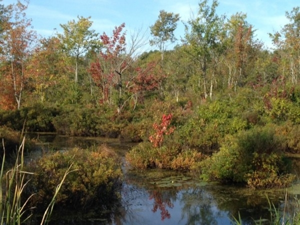 Mid-September early morning view of Caz Lake's fall foliage start