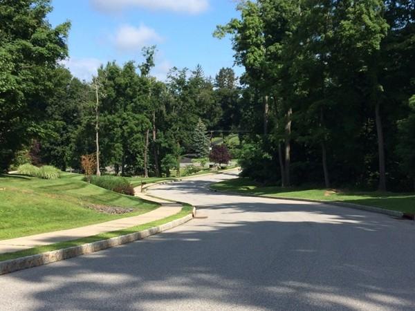Street view of Chadeayne Woods