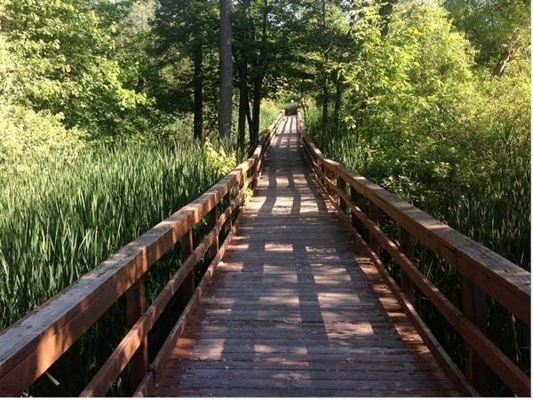 The Boardwalk beckons - go on... take a walk at the Great Baehre Swamp in Amherst