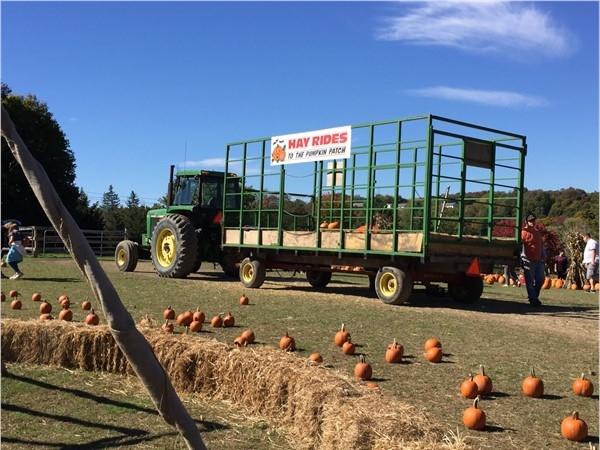 Halloween at Maples Farm