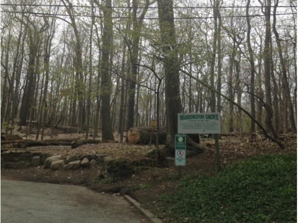 "Washington Grove- "" A Park In The City"""
