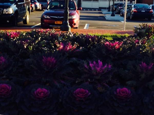 Beautiful landscaping in Huntington Village