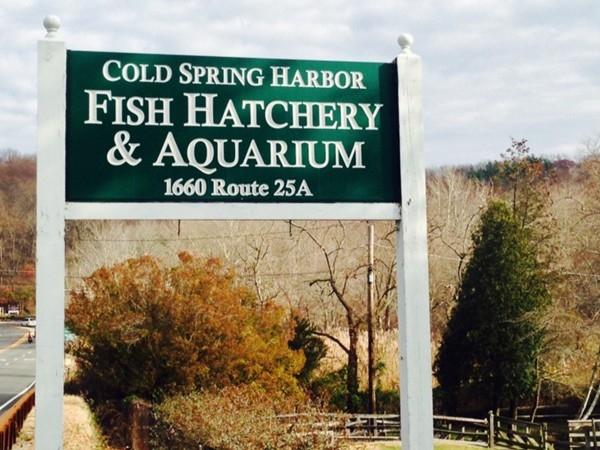 Cold Spring Habor Fish Hatchery and Aquarium