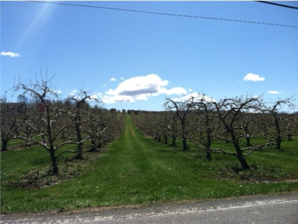 Orchards shrug off winter in Marlboro