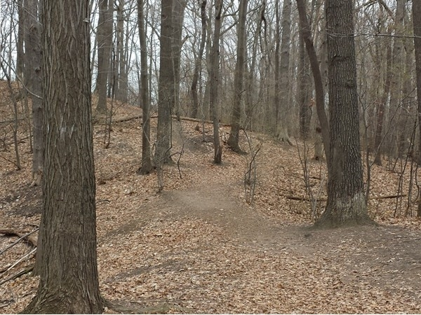 Hiking and running trail on Cobbs Hill and #1 school