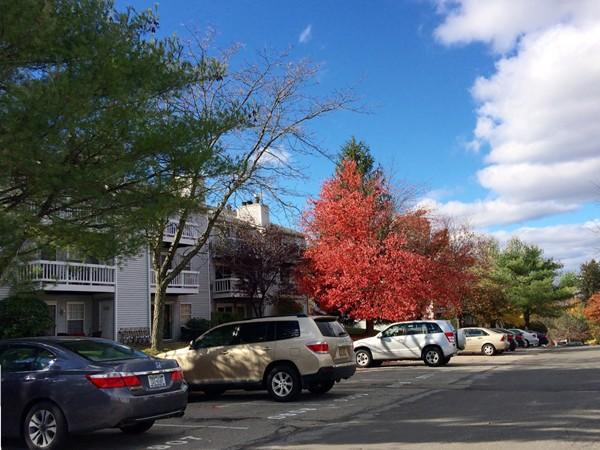 Fall in Lexington Hill